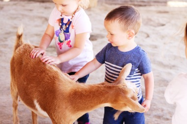 Luke's cousins petting the goats!